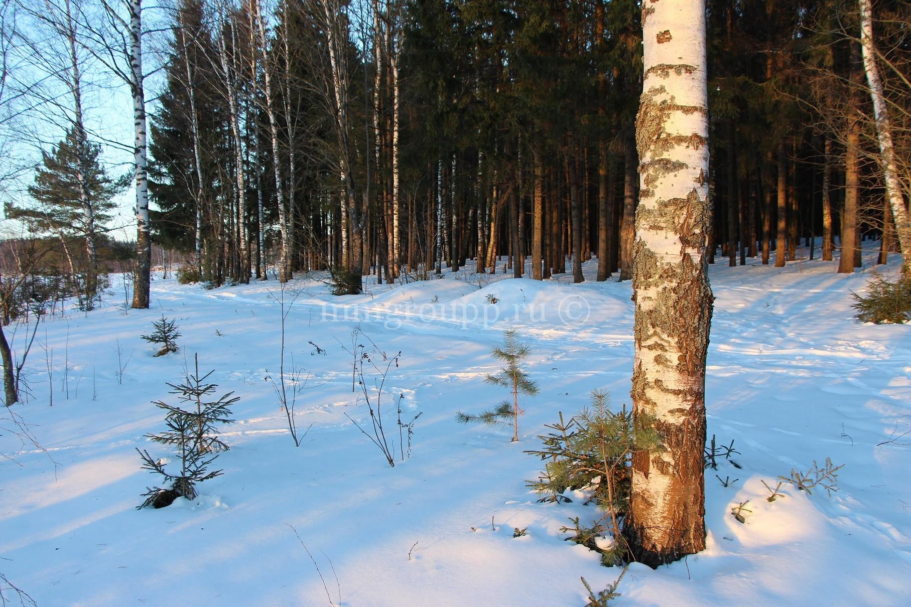 """""""Можайское море"""" зимой: фоторепортаж"""
